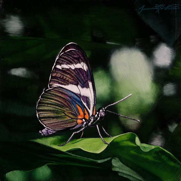 A painting of an iridescent butterfly standing on a leaf at the Butterfly Pavilion.